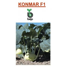 KONMAR F1