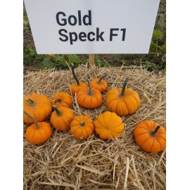 GOLD SPECK F1 opak. 100 nasion