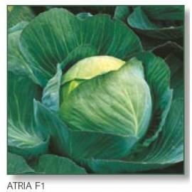 ATRIA F1