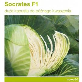 socrates f1