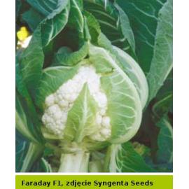 FARADAY AGRO-SEED