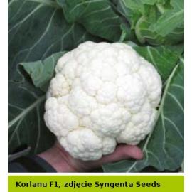 KORLANU AGRO-SEED